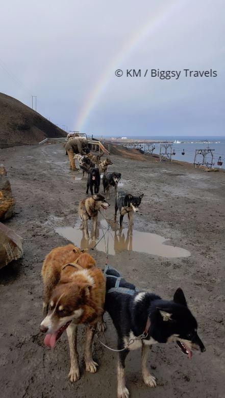 Svalbard dogs