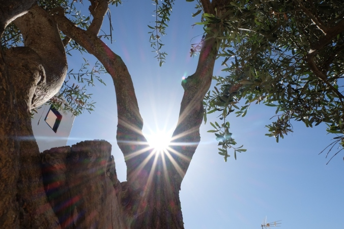 A Starburst shot looking up towards a tree in Binibeca