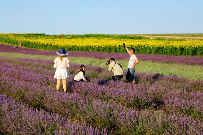 Hitchin lavender visitors to the UK